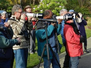 Downy Woodpecker paparazzi