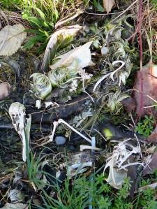 Duck skeleton