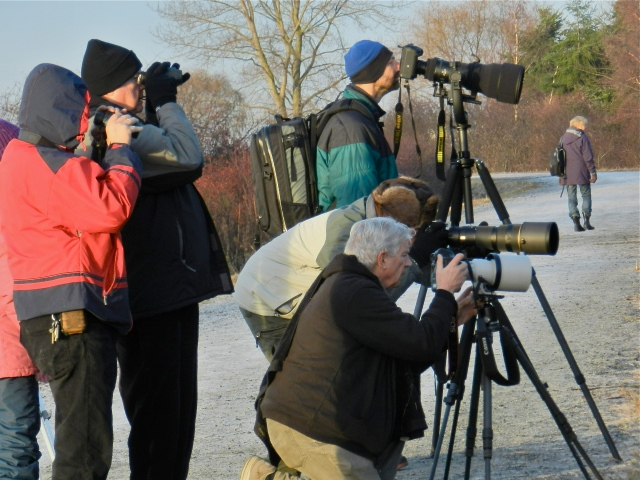 Long-horned Owl papparazzi (KB)