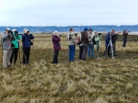 Looking for Curlew & Godwits (KB)
