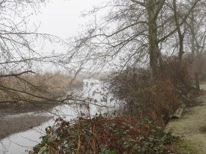 Fog and Ducks (BD)