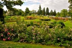 Rose Garden (KB)