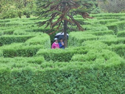 Ladies Lost in the Maze (RM)