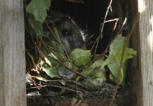 cosy winter nest for rat