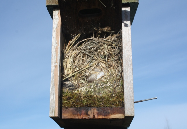 Double nest - Chickadee bottom, Sparrow top