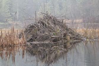 Beaver lodge (TC)