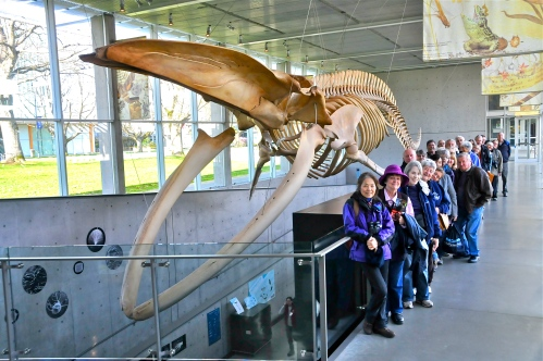DNCB & Blue Whale skeleton (KB)