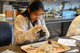 grad. student preparing bird specimen (KB)