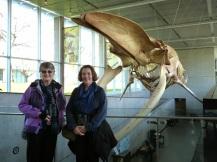 Pauline & Jean & Blue Whale (MS)