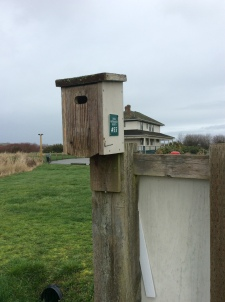 Nestbox near Cammidgew House (photo by TB)