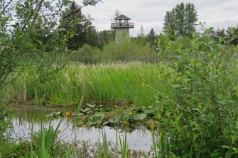 Tower at Tennant Lake (DH)
