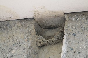 Evidence of Cliff Swallows Past (TC)