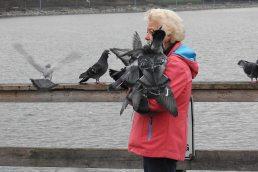 Feeding the pigeons (BA)