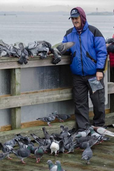 Feeding the pigeons (JMacD)