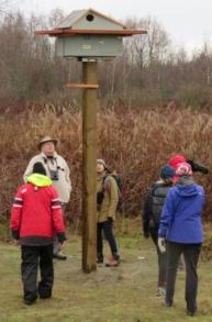 Barn Owl nest box (DH)