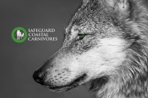 SafeguardCC_poster