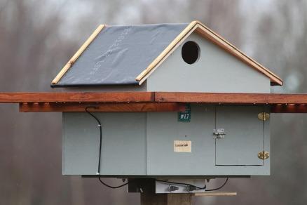 Barn Owl nest box (TC)