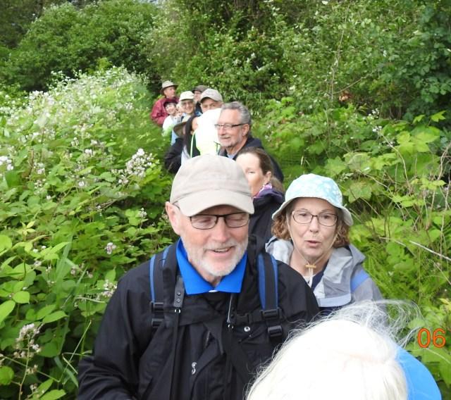 Pitt Lake Blackberry Infested Trail.JPG